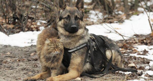 Усатый провокатор: как кот Тобик дрессирует собак