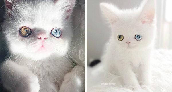 Пам Пам — котенок с разноцветными глазами, которые вас загипнотизируют