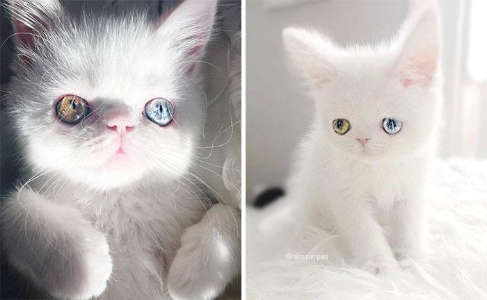 cat-eyes-heterochromia-iridis-pam-pam-coverimage