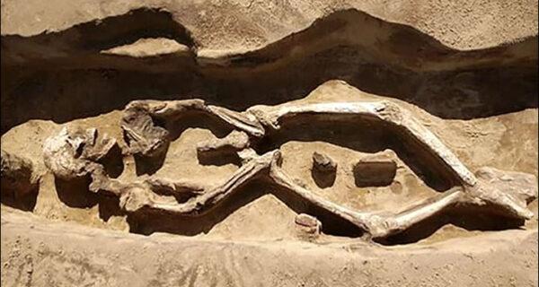 В Сибири обнаружено уникальное захоронение с «танцующим» скелетом