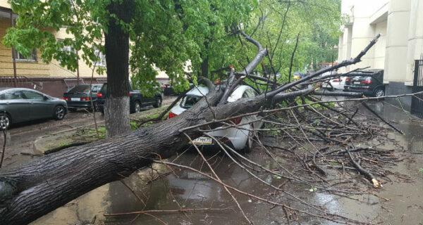 Ураган в Москве: погибли люди, повалены деревья, разбиты машины