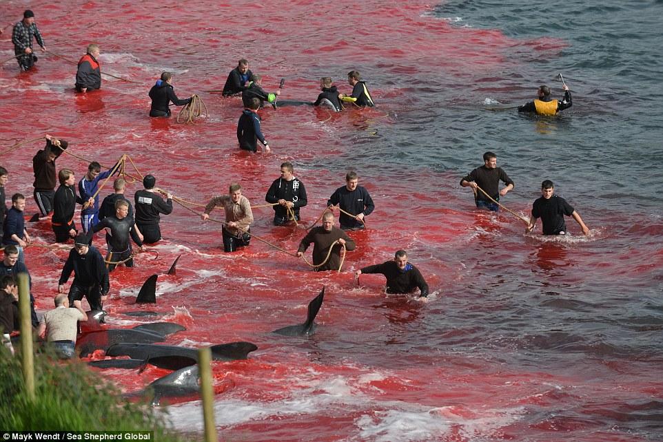 Убивают дельфинов картинки