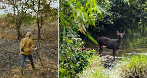 Пара 26 лет потратила на восстановление заповедника, пересаживая тропический лес