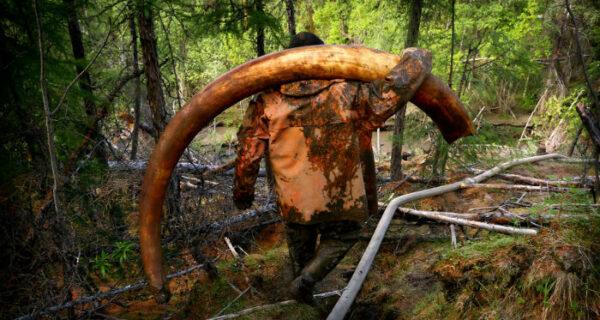 В Якутии новая «золотая лихорадка» — охота за бивнями мамонтов