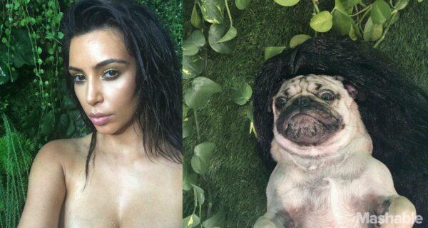 Мопс Даг воссоздал сексуальные селфи Ким Кардашьян