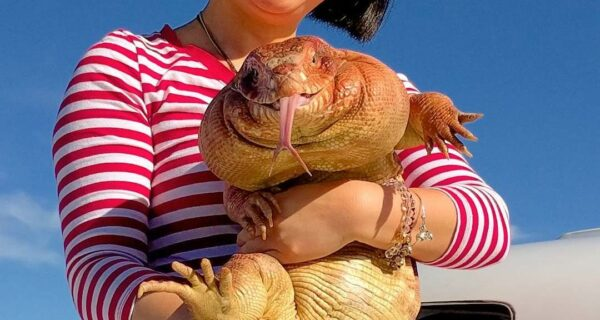 Наследник секретного агента: 10-килограммовая ящерица ищет работу в интернете