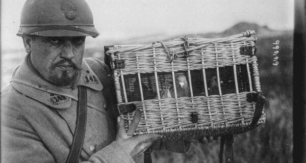 Голуби в погонах: какую роль пернатые сыграли в Первой мировой и при чем тут двухэтажные автобусы