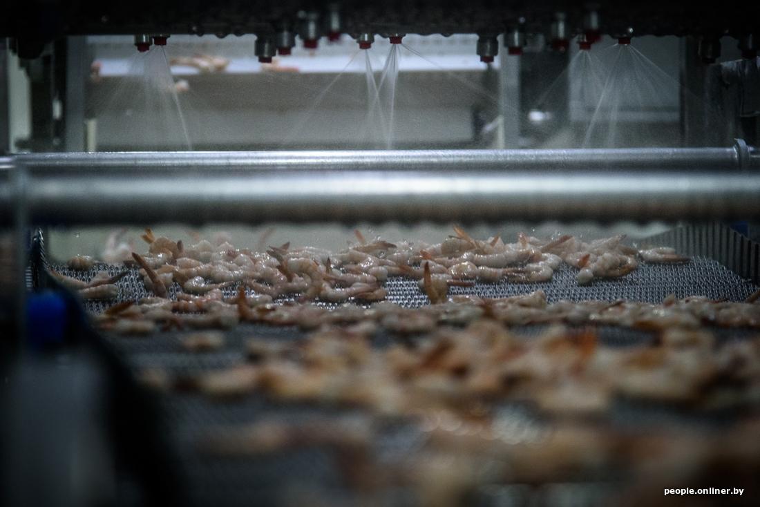 0209e85f11324d908abbf76afb4ca5ef - Как производят легендарные белорусские креветки