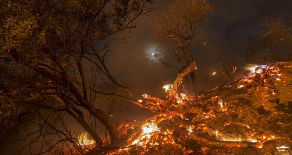 В Лос-Анджелесе борются с сильнейшим природным пожаром в истории округа