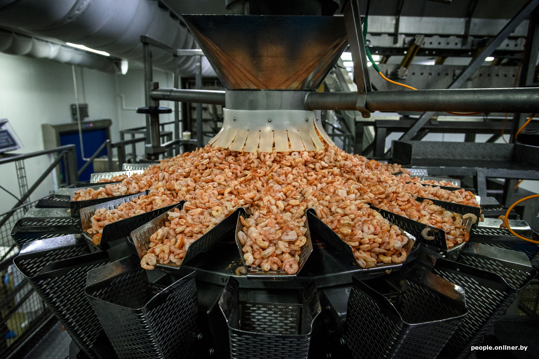96a195f77b73a97c4f9ee0e01cd8bd6d - Как производят легендарные белорусские креветки