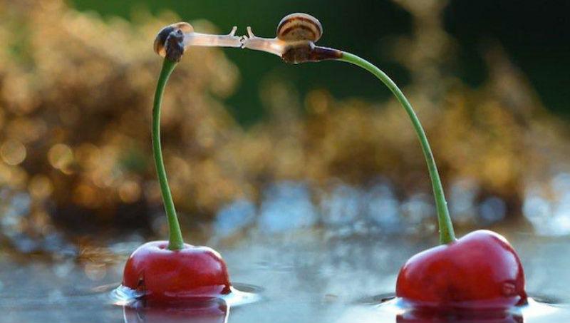 snails09