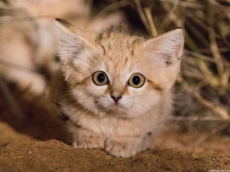 Лапки кошек картинки