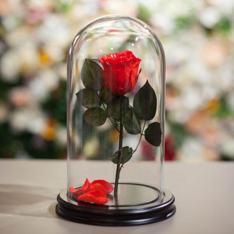 Bigpicture ru розы в колбе