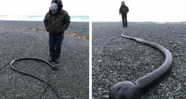 На побережьях Чукотского полуострова обнаружили огромных «морских змей» изСША