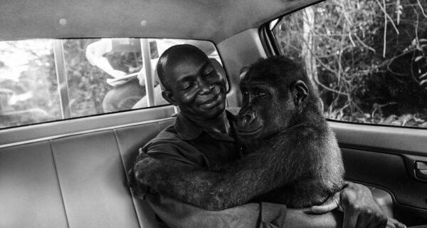 Самое трогательное фото из лучших работ конкурса Wildlife Photographer of theYear