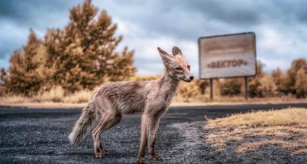Чернобыль — рай для сталкера: белорусский фотограф снимает Припять с инфракрасным фильтром