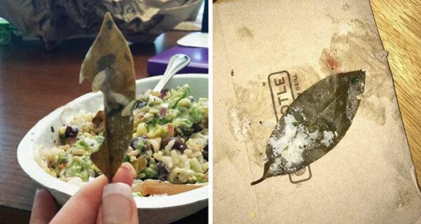 Загадка лаврового листа: пользователи Twitter жалуются на ресторан, обнаружив лист неизвестного происхождения