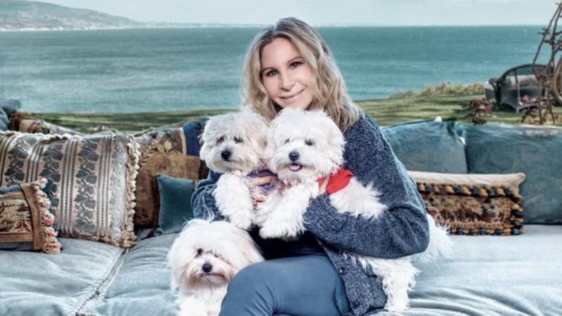 Barbra-Streisand-clone-dogs-960x540