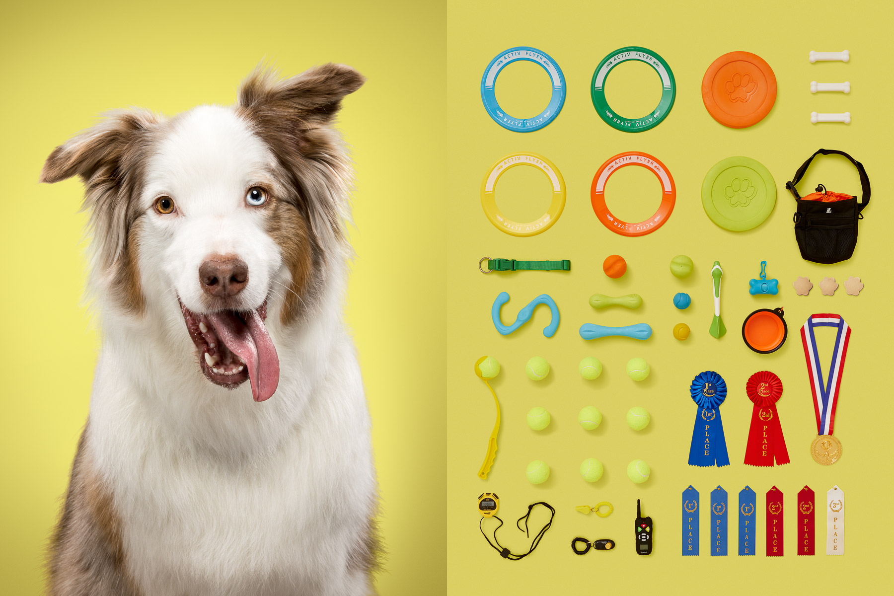 Dogs and their possessions: American revealed the essence of a dog's life