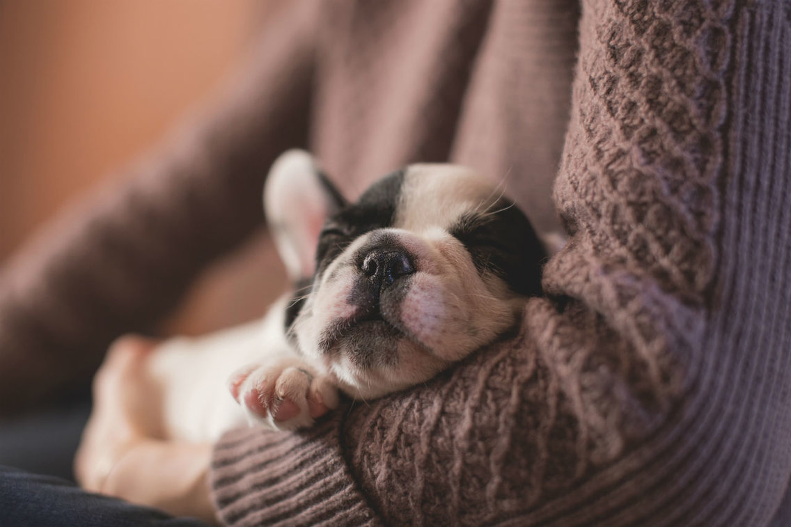 Leave to care for a dog: these companies give paid holidays when employees give birth to a pet