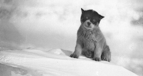 Уникальные фотографии из первой Австралийской антарктической экспедиции 1911–1914 годов