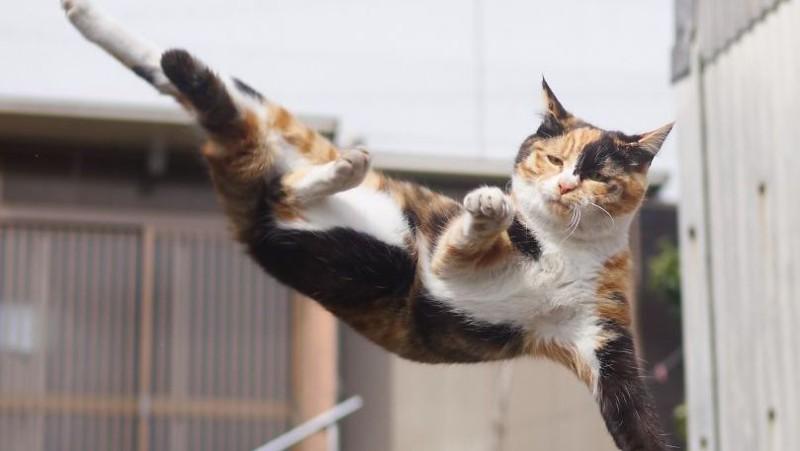ninja-cats-photography-hisakata-hiroyuki-59f19ad3a95f6__880