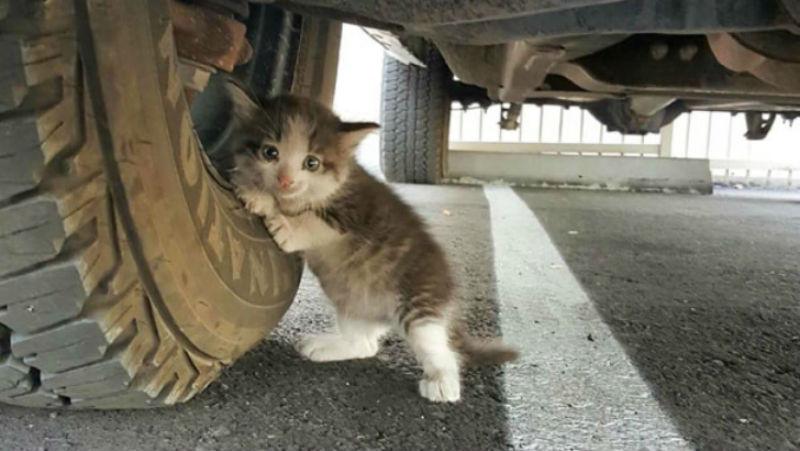 Парень нашел напуганного котенка под грузовиком и не смог оставить его там