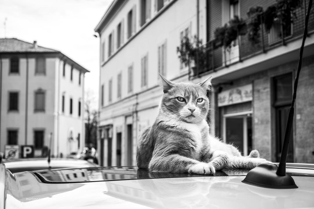 Italian cats who come here as home
