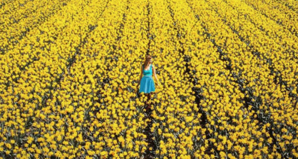 В Нидерландах распустились 7 миллионов тюльпанов, и это прекрасно
