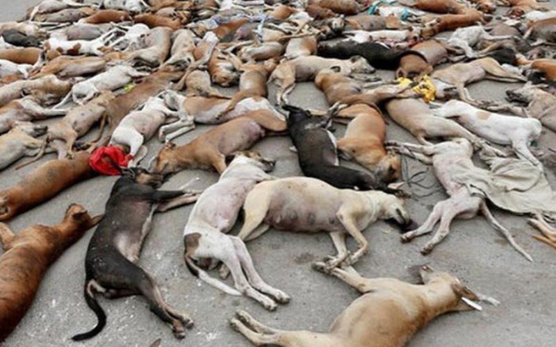 Скандальное фото «убийства собак в России перед ЧМ» оказалось фейком