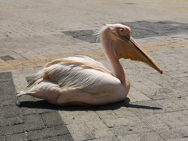 10 вещей, которые не стоит делать на Кипре можно, кстати, стоит, будет, Кипре, которые, самом, Ларнаки, здесь, вообще, чтобы, только, розетки, аэропорта, Resort, берегу, просто, нужно, Покупать, халуми