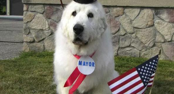 Четырежды переизбранный пес-мэр из США покинет свой пост ради пенсии