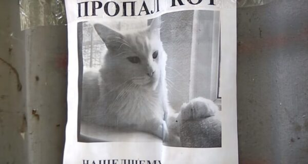 Видео из России с объявлением о пропаже кота и оптической иллюзией стало вирусным