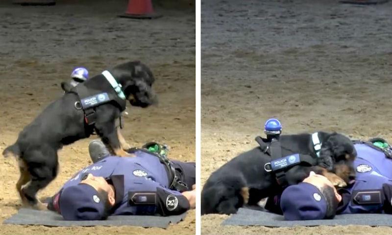 police-dog-cpr-1