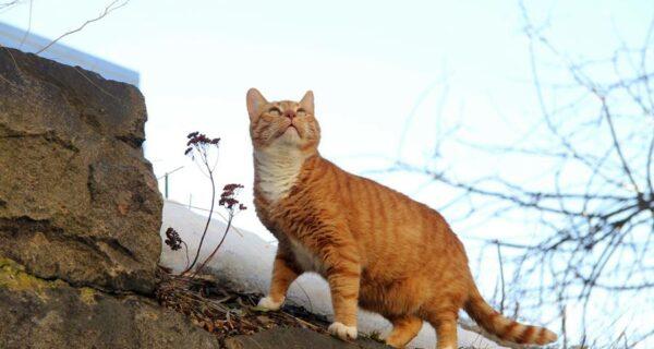 Старший мяучный сотрудник Выборгского замка: кот получил трудовую книжку