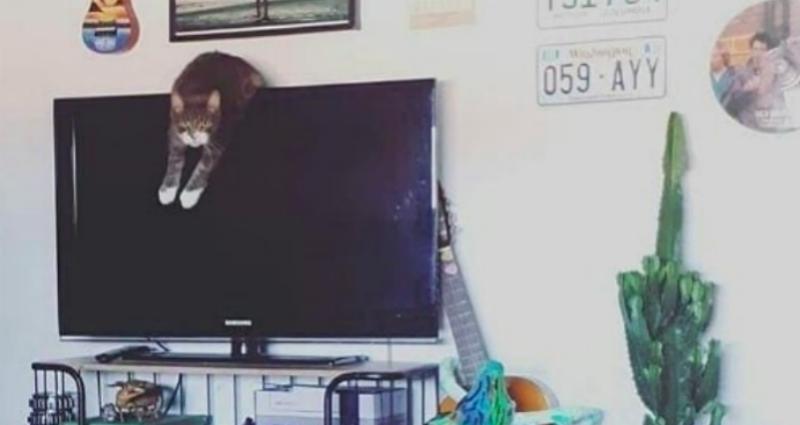 Инстаграм-аккаунт, в котором коты признаются в совершенных преступлениях и не раскаиваются