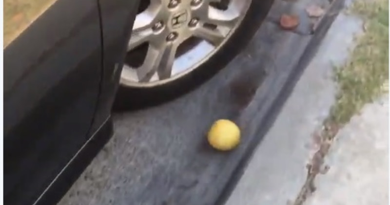 О боже, только не останавливайся: видео, где лимон катится с горы,  взорвало твиттер