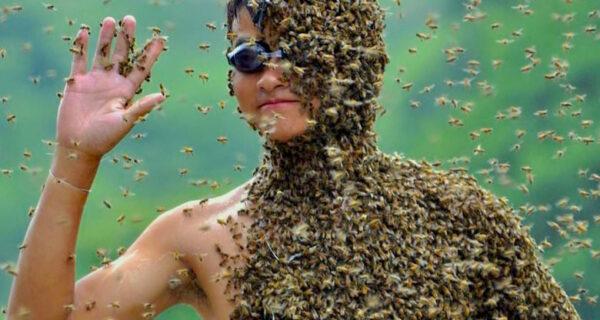 «Без особой причины?»: почему летом осы ненавидят людей