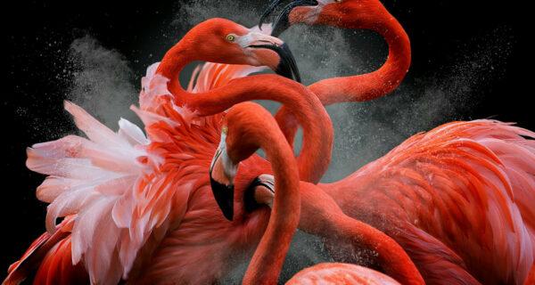 Лучшие работы с конкурса «Bird Photographer of theYear»