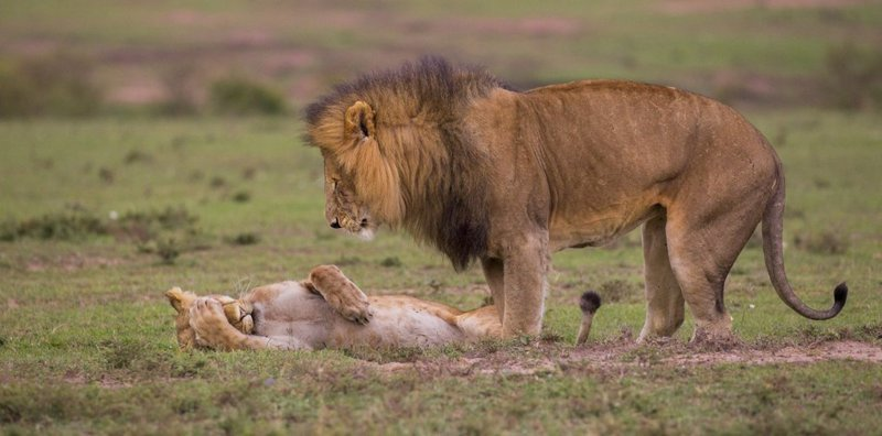 The funny thing with competition Comedy Wildlife Photography Awards 2018