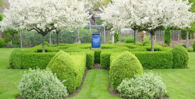 Оформление плодового сада декоративными кустарниками