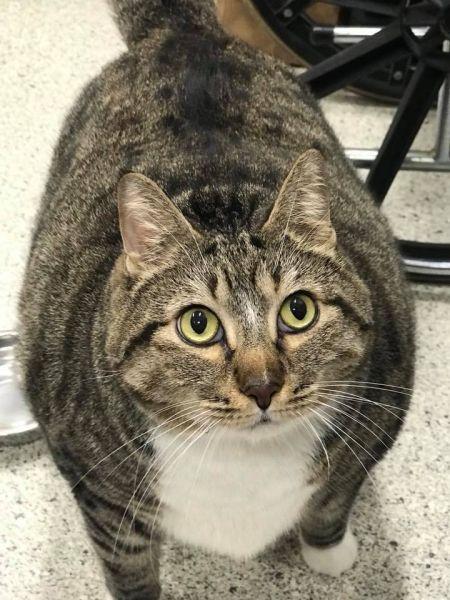 толстый кот Пончик нашел новую семью