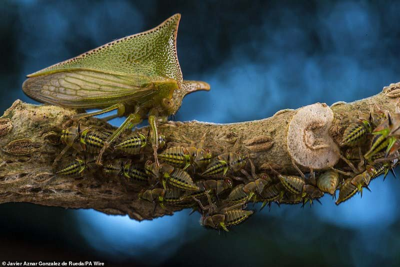 """The best works of the photo contest """"Wildlife Photographer of the Year 2018"""""""