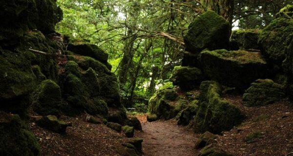 Загадочный Пазлвуд — лес, подаривший вдохновение самому Толкиену