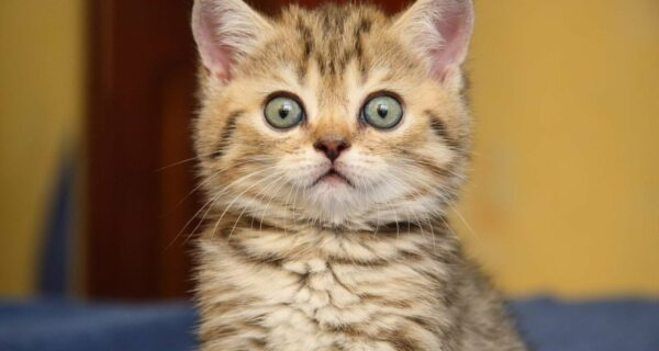 Котики превыше всего: россиянка села на 9 лет за убийство подруги, отказавшейся покормить котенка