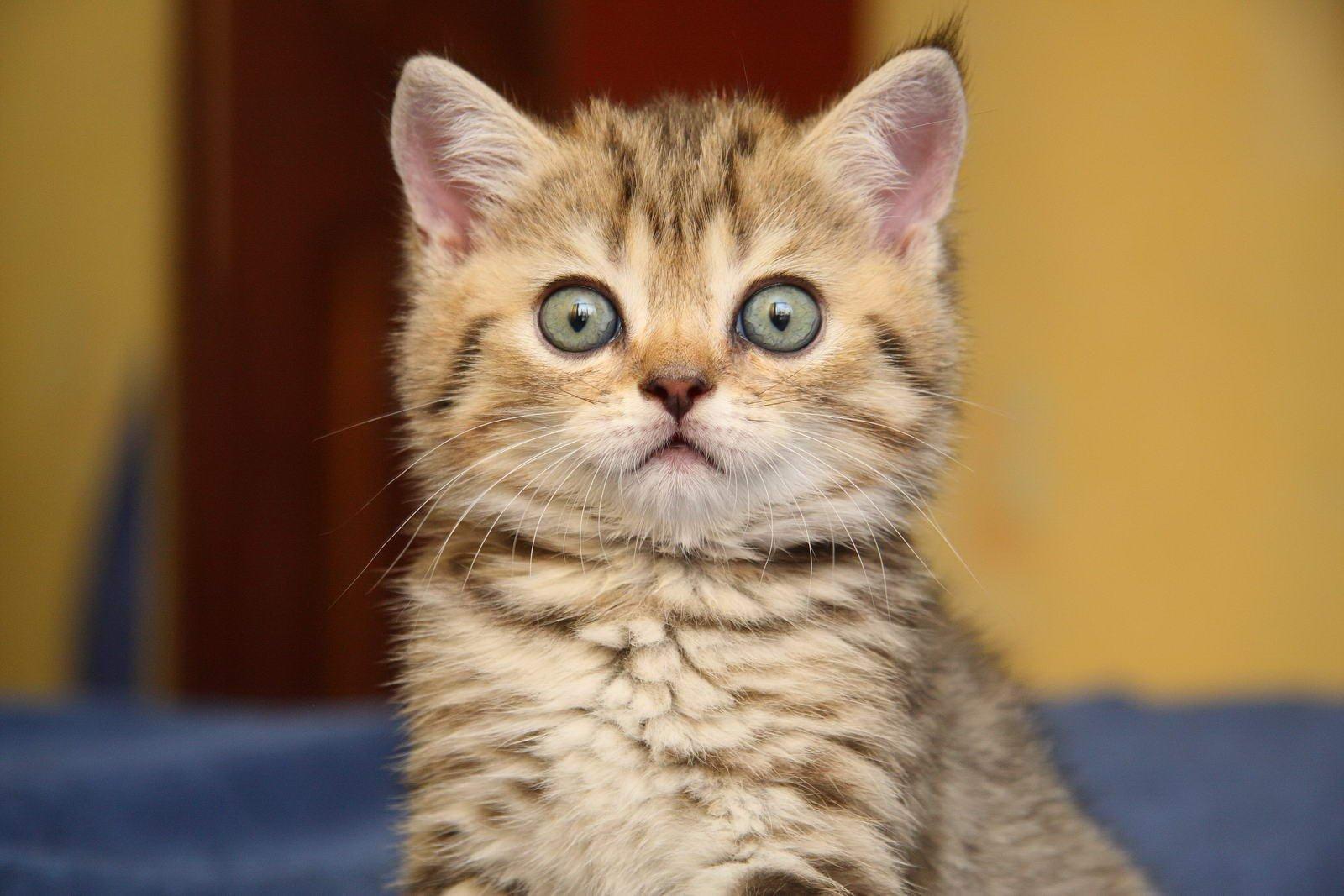 картинка непонимающего кота этих целей