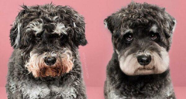 Невероятное преображение: милые песики до и после японской стрижки