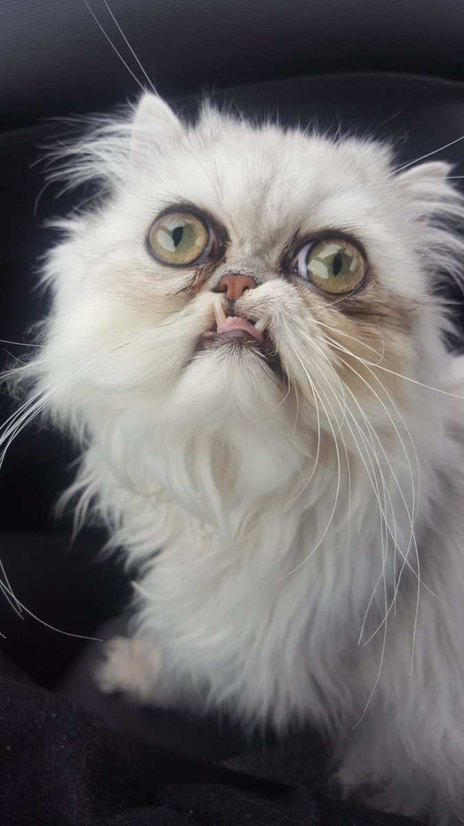 """""""It's a stuffed or a live cat?"""": this muzzle could be a new meme about despair"""