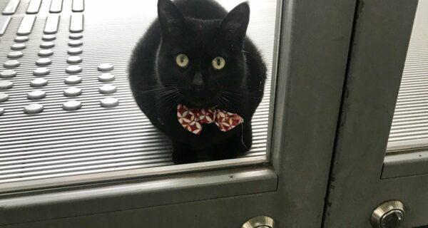 «Пустите, я войду»: пара японских котов уже два года пытается попасть вмузей