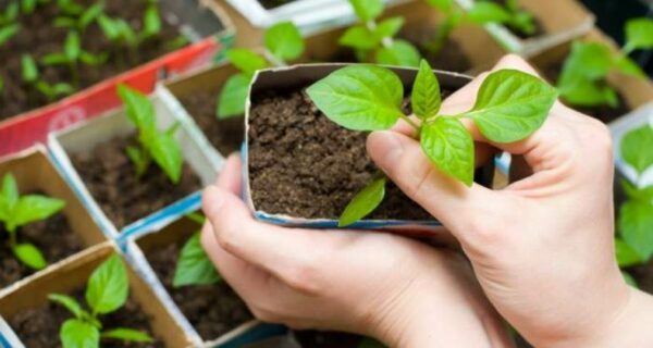 Канадский блогер и растения попытались дышать за счет друг друга. Что из этоговышло